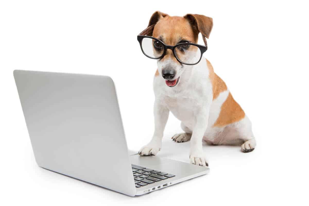 Pet Technology